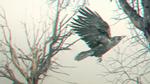 Обои Ворон в полете среди голых деревьев, by twistedangel0