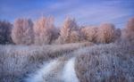 Обои Первый зимний рассвет / По дороге к Зиме, фотограф Богорянов Алексей