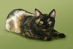 Обои Трехцветная зеленоглазая кошка на зеленом фоне, by Ankyloce