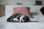 Обои Милый котик лежит на постели
