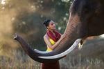 Обои Девушка и слон, фотограф Sutipond Somnam