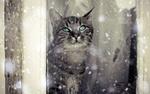 Обои Кошка сидит за окном и смотрит на падающий снег
