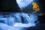 Обои Лес и осеннее дерево у водопада, by Doug Shearer