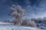 Обои Деревья, покрытые инеем, на заснеженных берегах незамерзшей речки, фотограф Bartlomiej Korczak
