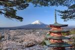 Обои Пагода, цветущая вишня и вулкан Фудзи / Fuji, Япония / Japan