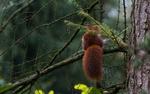 Обои Белка с пушистым хвостом на ветке дерева