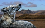 Обои Волк на фоне гор