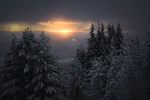 Обои Ели в снегу на фоне затянутого облаками неба. Фотограф Brankov Branislav