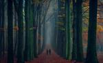 Обои Девушки идут по дороге с осенними листьями. Фотограф Saydani Hmetosche