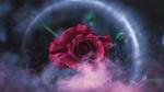Обои Розовая роза в ореоле
