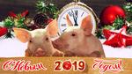 Обои Два поросенка на новогоднем фоне и надписью С новым 2019 годом