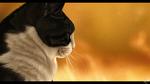 Обои Черно-белый кот на оранжевом фоне, by DikkeBobby