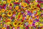 Обои Цифры 2019 на фоне ковра из цветов
