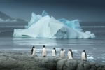 Обои Дружным рядом стоят пингвины на берегу Антарктиды, на фоне льдины в океане, фотограф Даниил Коржонов