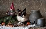 Обои Кот рядом с новогодними атрибутами и глиняной посудой, фотограф Eleonora Grigorjeva