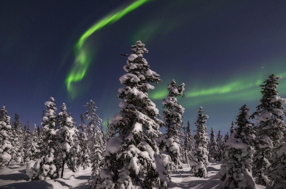 Обои для рабочего стола Северное сияние над зимнем лесом, фотограф Васильев Алексей
