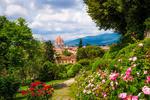 Обои Розовый сад Флоренции
