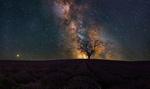 Обои Одинокое дерево в конце лавандового поля на фоне млечного пути на небе. Фотограф Цветан Ганев