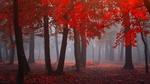 Обои Туманное утро в лесу