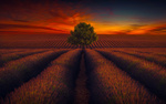 Обои Дерево под облачным небом на лавандовом поле, by Saydani Hmetosche