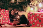 Обои Кошка лежит под елкой среди подарков
