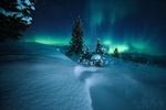 Обои Ели под ночным небом с серным сиянием, Норвегия