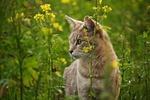 Обои Кошка в траве среди цветущих сорняков