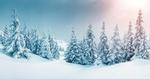 Обои Заснеженные деревья ели выстроились в ряд на снежном просторе на фоне прячущегося солнца