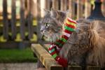 Обои Пушистый кот в разноцветном шарфе сидит на лавочке