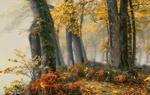 Обои Туманное осеннее утро в осеннем лесу, by Patrice Thomas