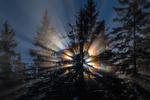 Обои Лучи солнце пробиваются сквозь ветви деревьев, by andy dauer