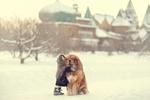 Обои Девочка обнимает собаку, сидящую на снегу / Большой друг, фотограф Юлия Таратынова