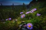 Обои Сиреневые цветы в траве, фотограф Павел Сагайдак