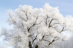Обои Красивое заснеженное дерево на фоне неба, by Lichtmagnet
