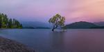 Обои Одинокое дерево в воде, фотограф Derek Zhang