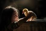 Обои Девочка и утенок, фотограф Елена Миронова