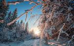Обои Солнечная лесная просека в районе Чусовой. Пермский край. Фотограф Андрей Чиж