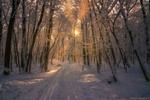 Обои Дорога в зимнем лесу, by Aleksei Malygin