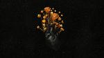 Обои Черное сердце из которого выросли золотые цветы