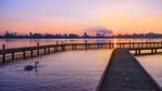 Обои Лебедь возле моста на реке во время заката