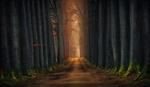 Обои Дорога с высокими деревьями по обе стороны, by Saydani Hmetosche