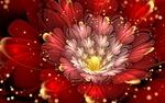 Обои Фрактальный красный цветок