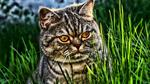 Обои Кошка в траве