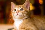 Обои Рыжий котенок на фоне боке