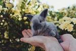 Обои Серый кролик на руках мужчины на фоне цветов