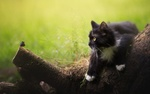 Обои Кошка смотрит на бабочку, лежа на поваленном дереве
