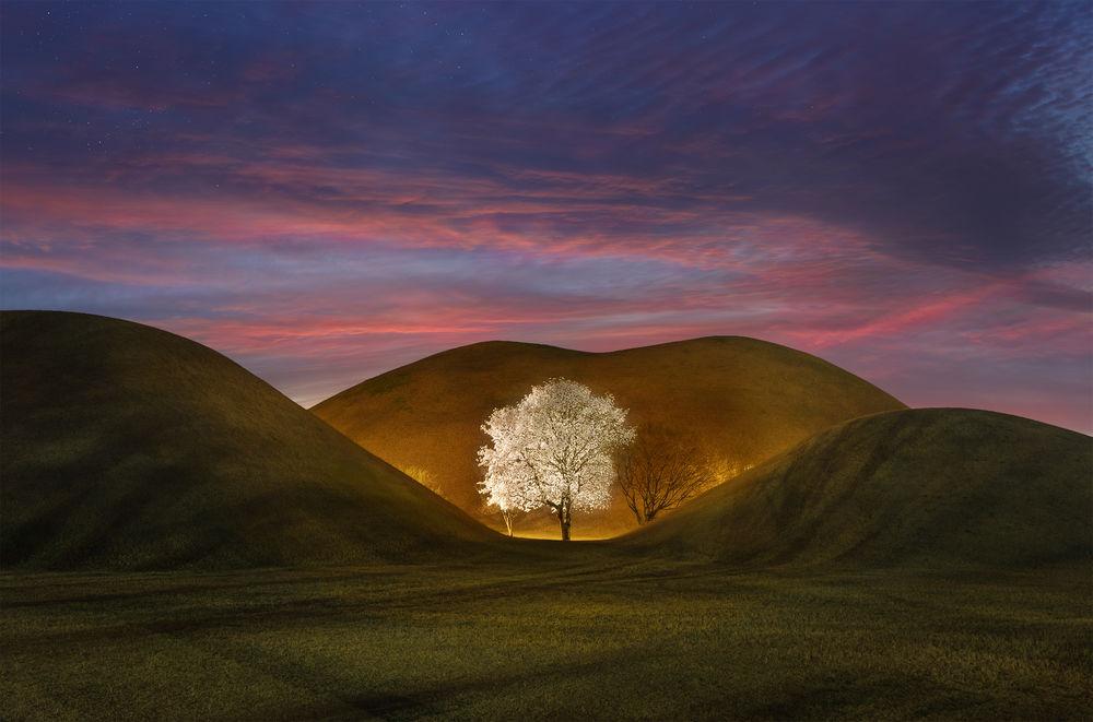 Обои для рабочего стола Белая магнолия среди холмов на закате весеннего дня, фотограф Jaeyoun Ryu