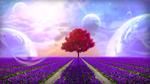 Обои Одинокое дерево на цветочном поле на фоне неба с планетами, by mumu0909