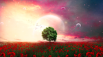 Обои Одинокое дерево на маковом поле на фоне неба, by mumu0909
