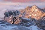Обои Бонсай в горах хребта Bukhansan, South Korea / Пукхансан, Южная Корея зимой, фотограф Jaeyoun Ryu